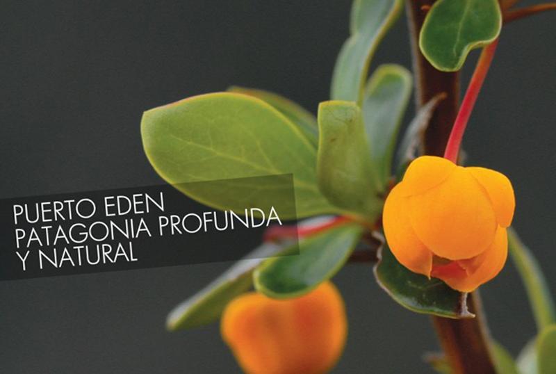 Sitio Web Puerto Eden